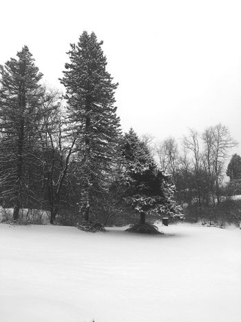 Snow Winter Cold Temperature Tree Nature Tranquility Cold