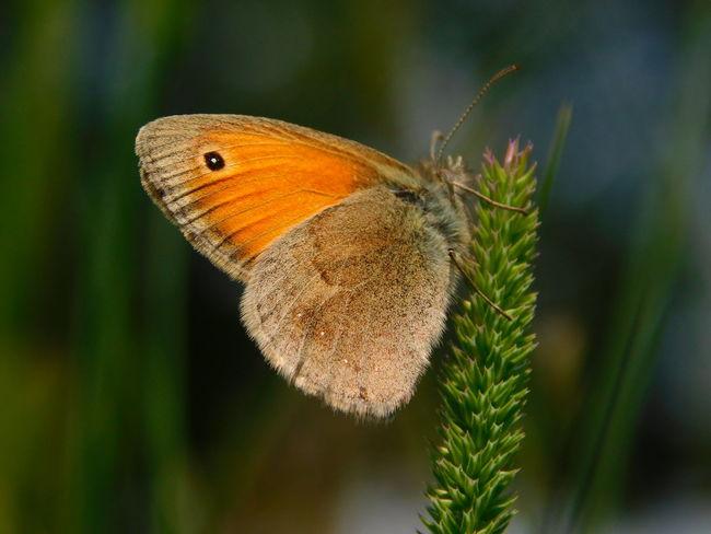Beauty In Nature Butterfly ❤ In The Fields Springtime Week On Eyeem