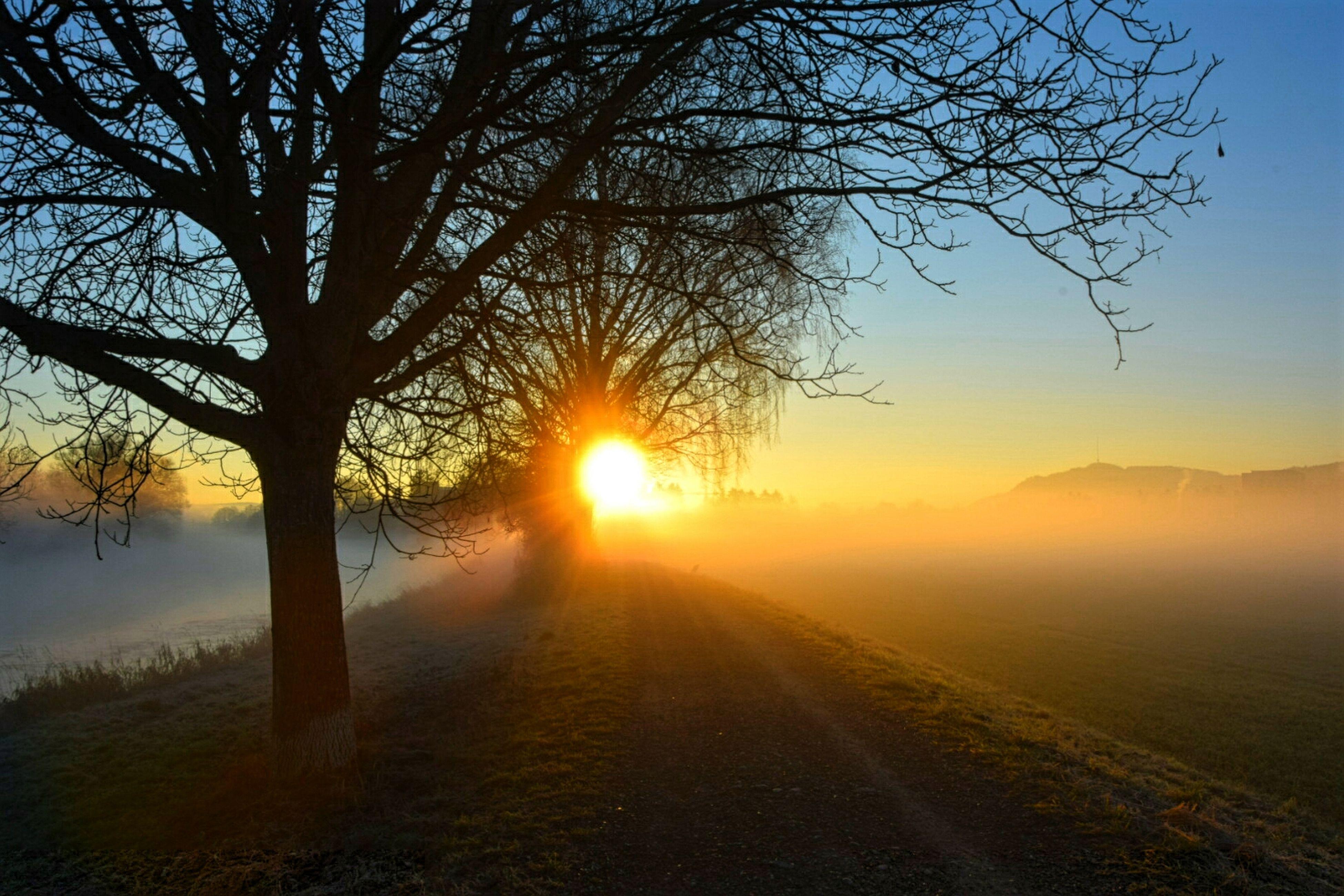sunset, sun, tranquility, bare tree, tranquil scene, scenics, tree, beauty in nature, landscape, nature, silhouette, sunlight, sky, idyllic, sunbeam, the way forward, orange color, non-urban scene, branch, lens flare