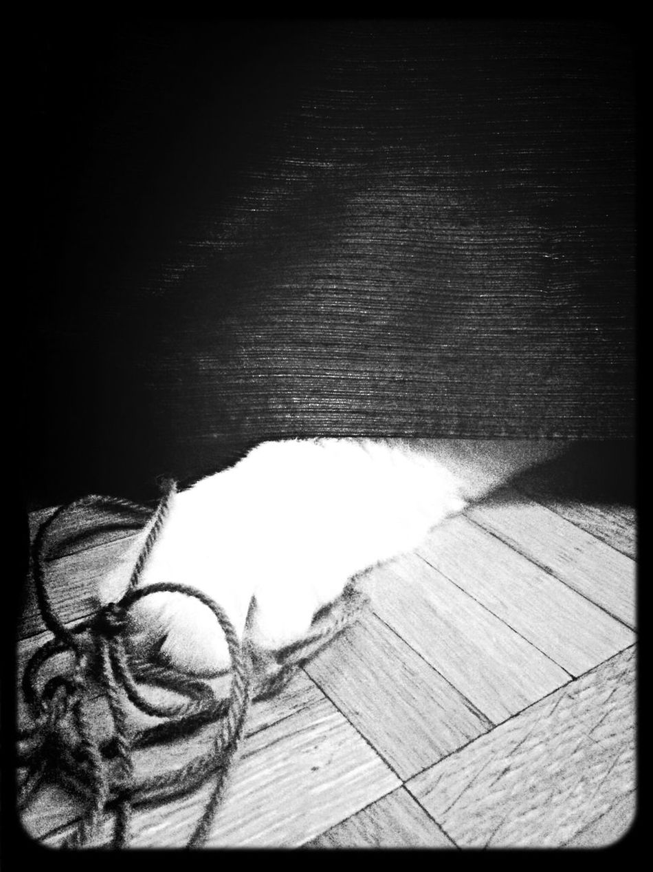 Cache-cache Ragdoll Cat EyeEm Best Shots - Black + White EyeEm Animal Lover
