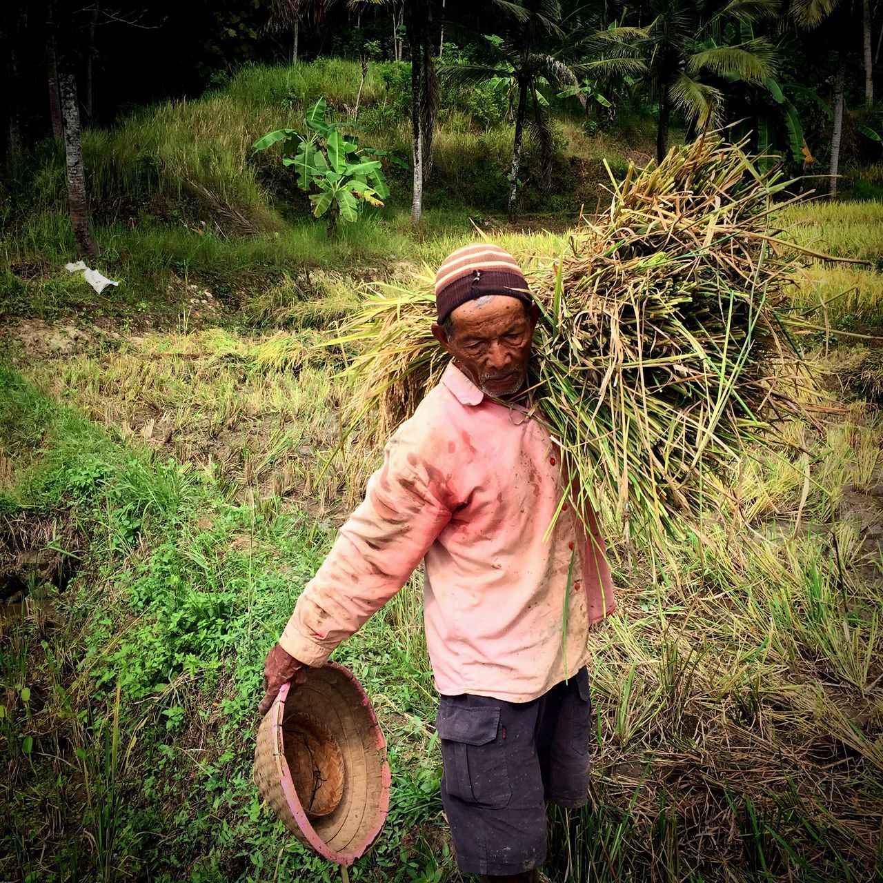 Senior Man Carrying Dry Grass At Field