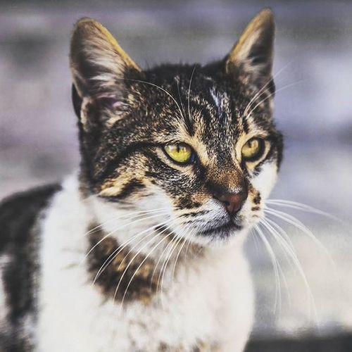 Cat Eyüpsultan  Istanbul