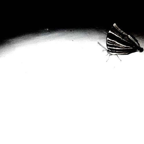 ButterFREE. Let it be. Butterfly ❤ Lights And Shadows Freedom Of Expression Choices Capturing Movement GODS GIFT O EARTH Nature Photography Love To Take Photos ❤ Add Colour To Life Shotforpassion
