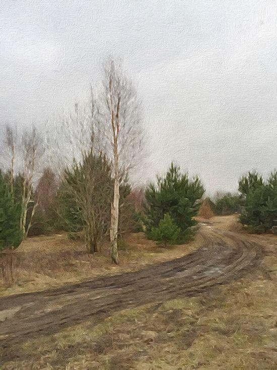 The Curve - Gdynia 18 February 2016 ( IPhone 6+ ) Iphone 6 Plus IPhoneography Painterly Forest Landscape_Collection Landscape Path Gdynia Poland EyeEm Best Shots EyeEmBestPics EyeEm Masterclass EyeEm Best Edits EyeEm Gallery