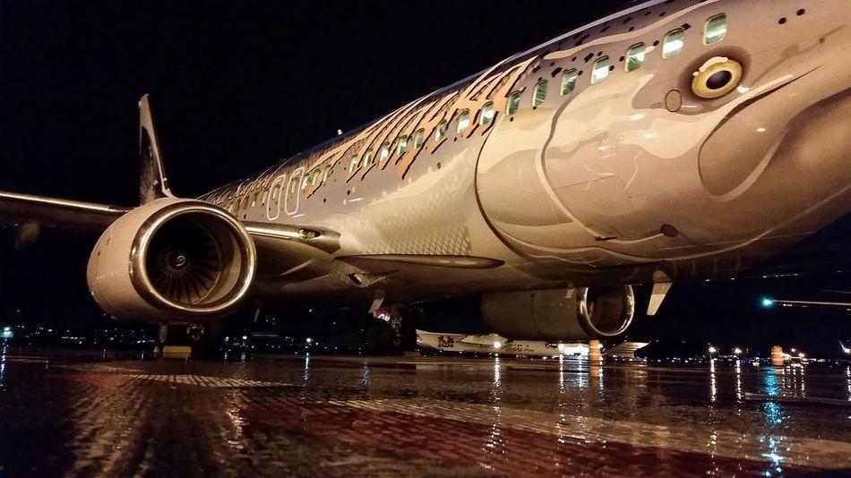 Big fish Jetlife Travel Photography Plane Traveler
