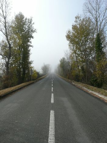 Stop Carretera Boira Niebla Arboles Bosque Forest On Road Nice My Photo