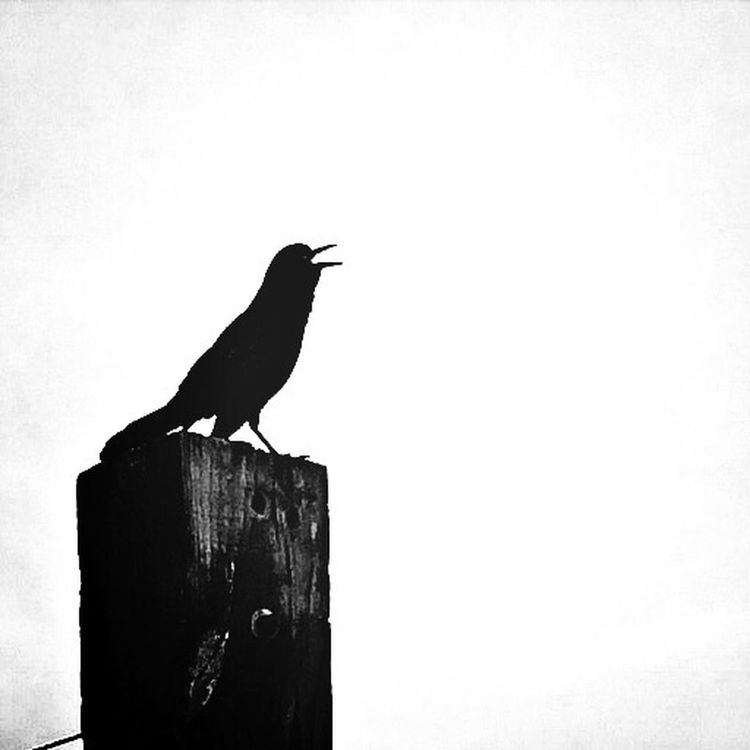 Sandytoesstudio Monochrome Black&white Backyard