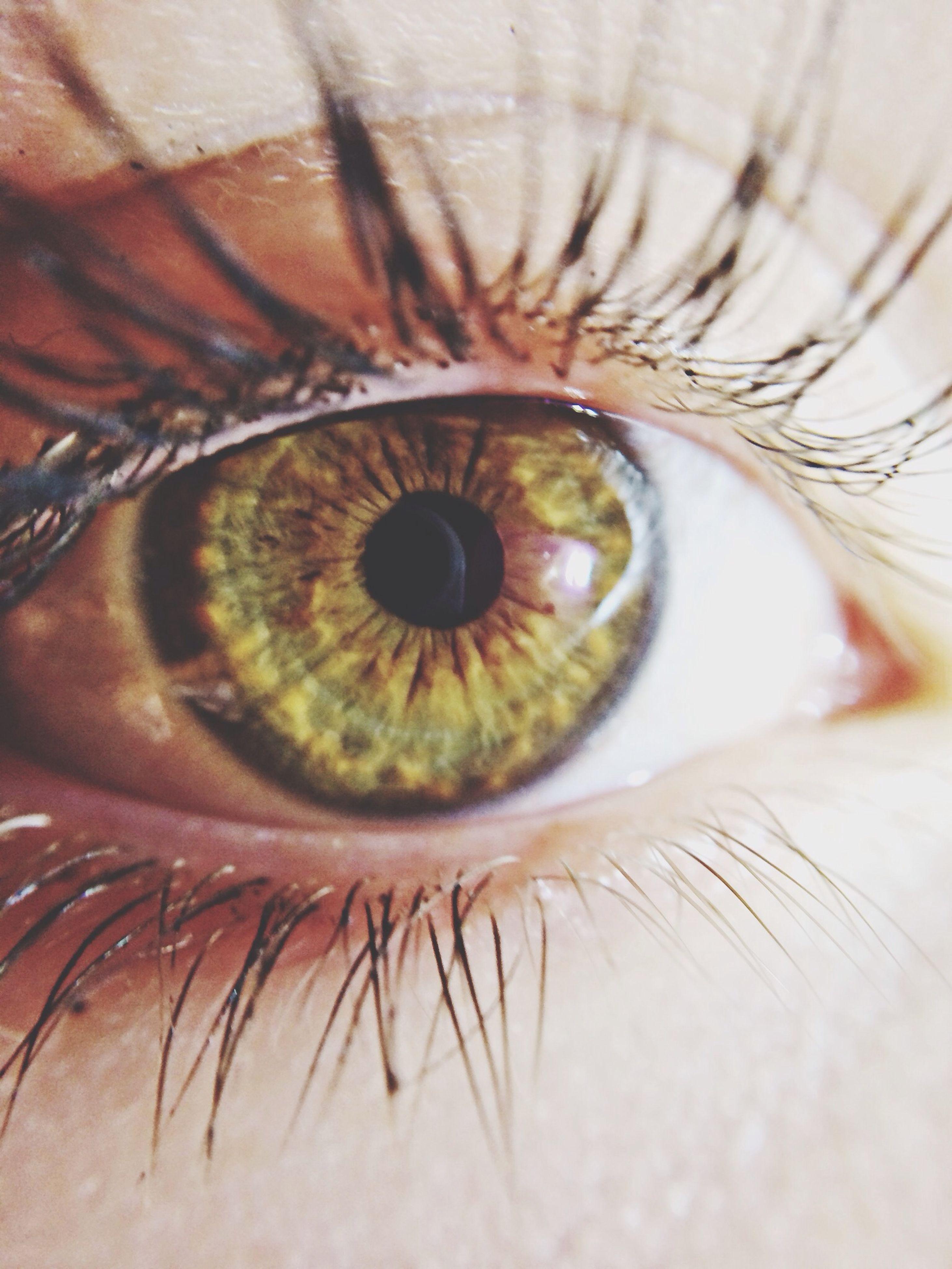 eyelash, extreme close-up, human eye, full frame, close-up, eyesight, extreme close up, backgrounds, sensory perception, part of, iris - eye, eyeball, macro, detail, indoors, human skin, selective focus