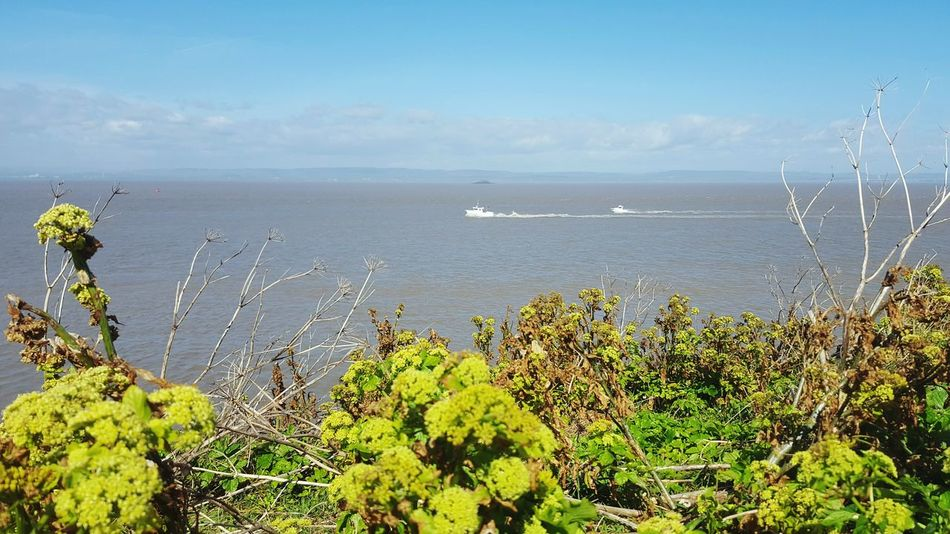 Boats Boats In The Distance Countryside Walk Landscape_Collection Blue Sky Clouds Taking Photos By The Sea Sea Sea And Sky Water Sky And Clouds Landscape Nature Sky English Countryside Seaside Bushes