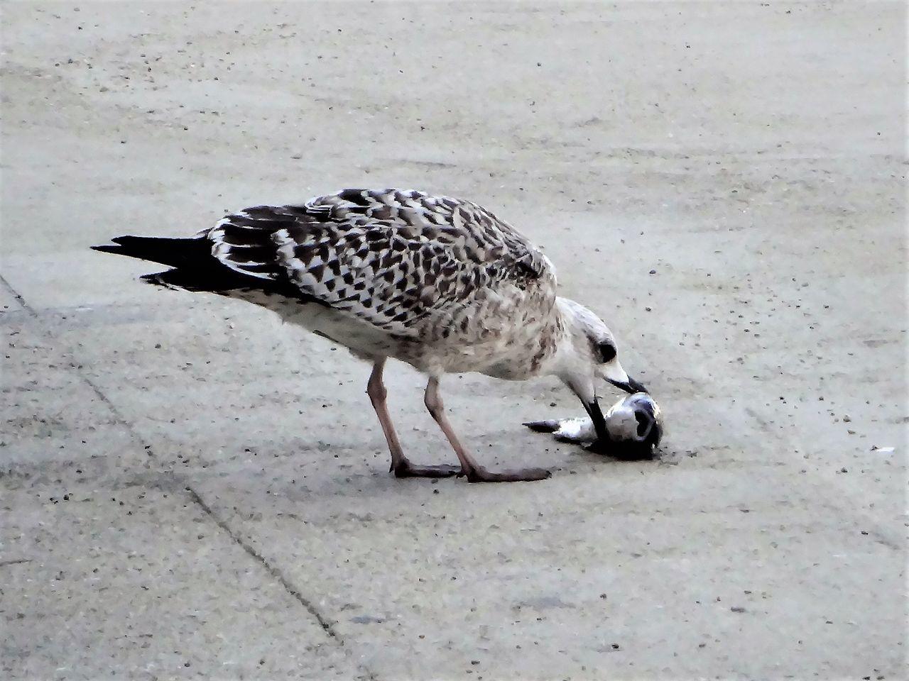 bird, animal themes, one animal, animals in the wild, animal wildlife, day, outdoors, no people, nature, perching, bird of prey