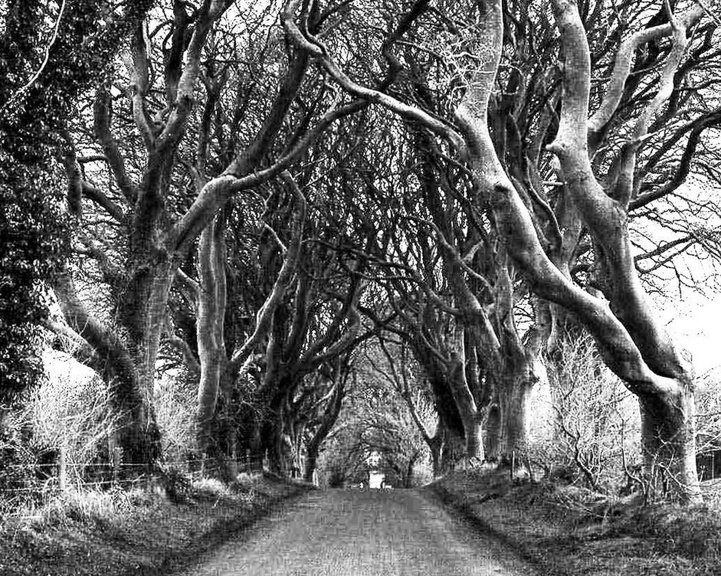 DarkHedges AMPt_Nature IPhoneography WeAreJuxt.com Ireland Trees Gameofthrones iPhone Iphoneart