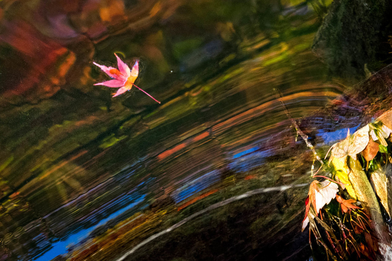 water, nature, outdoors, fragility, no people, growth, day, leaf, close-up, beauty in nature, flower, plant, tree, refraction, freshness