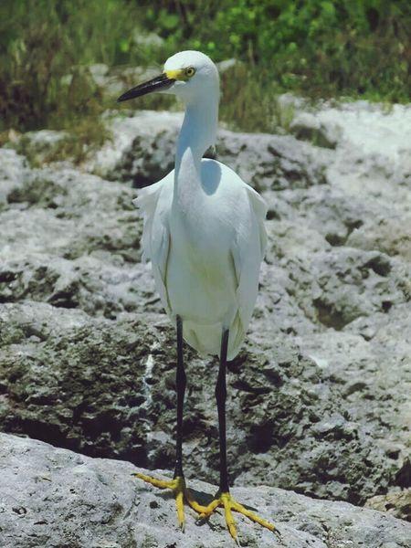 Birds Bird Watching Bonita Beach Florida