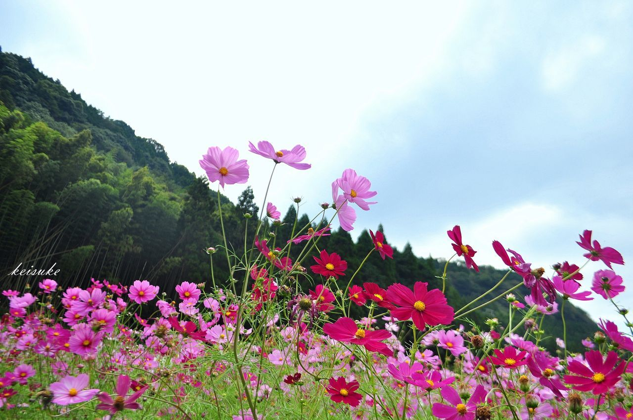 at 萌の里 in Nishiharamura , Kumamoto , Japan