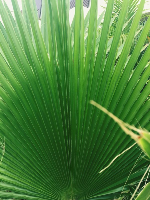 Plants green nature Taking Photos Colour Of Life