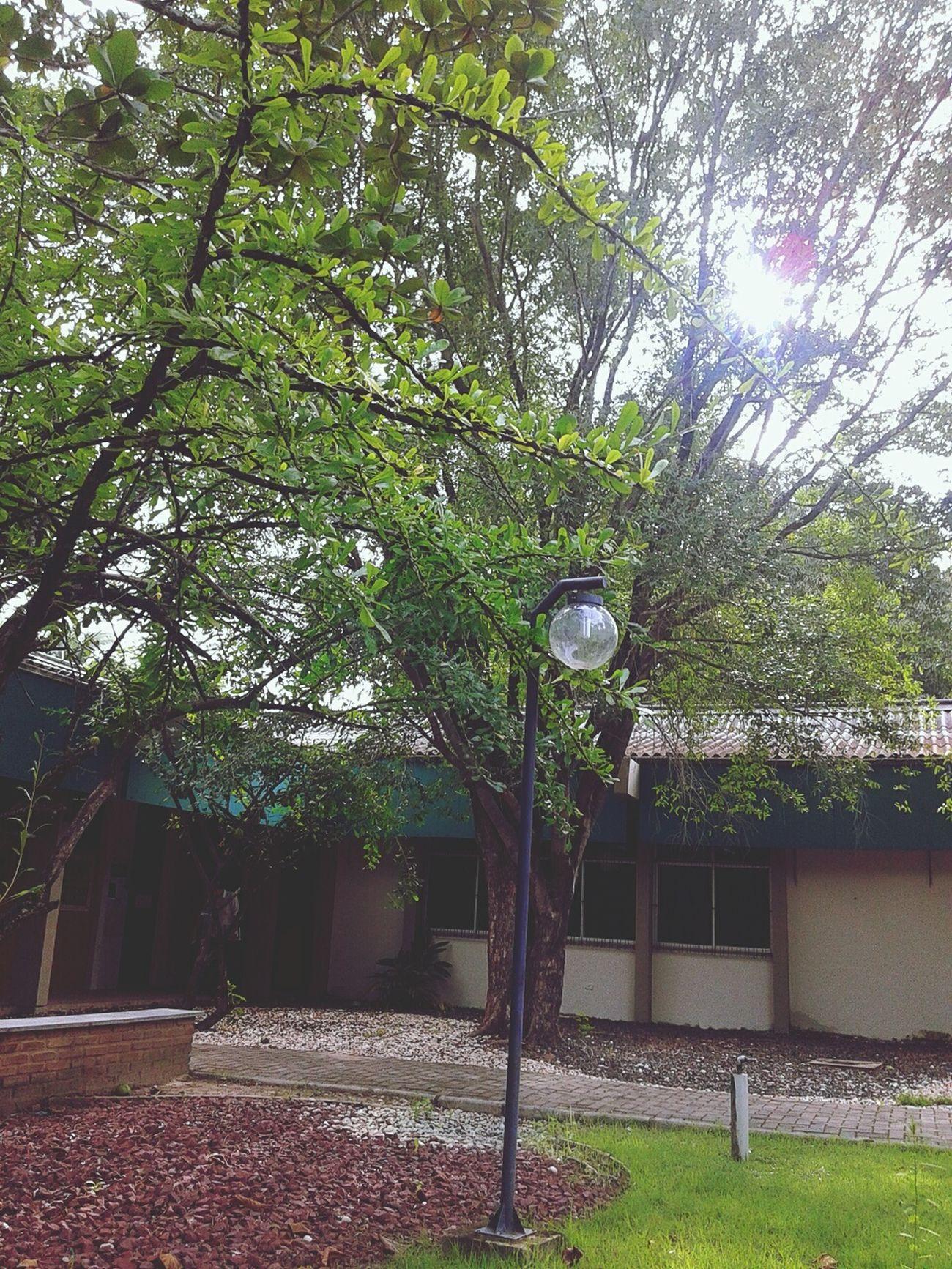 As árvores fazem sombra e companhia, do que mais você precisa? Procrastinating Learning Ufpi Paisagem First Eyeem Photo