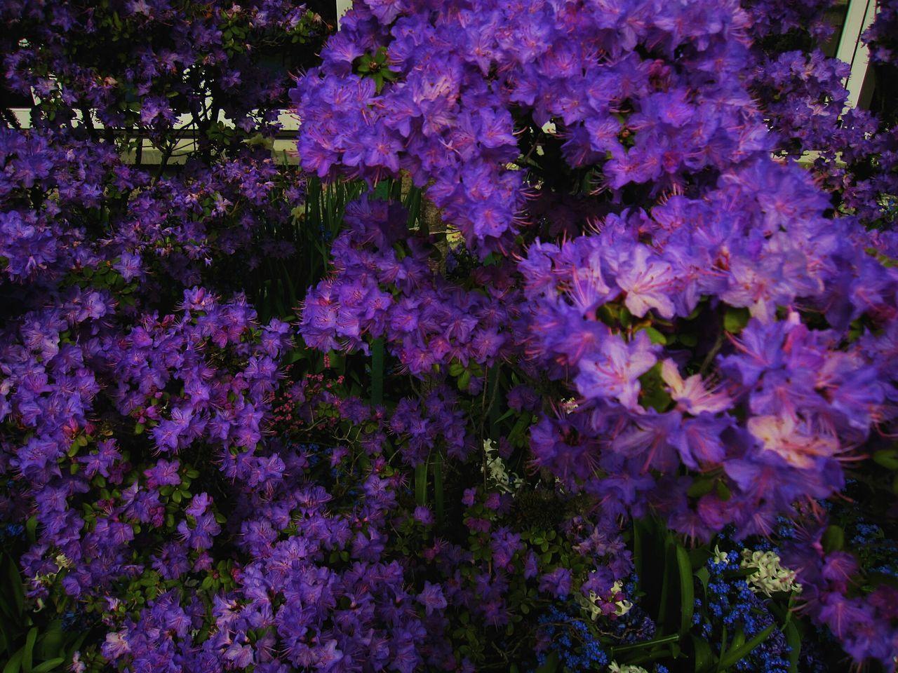 Vancuber 2011/05 Buchart Garden Taste Of Japanese Victoria Island, Canada