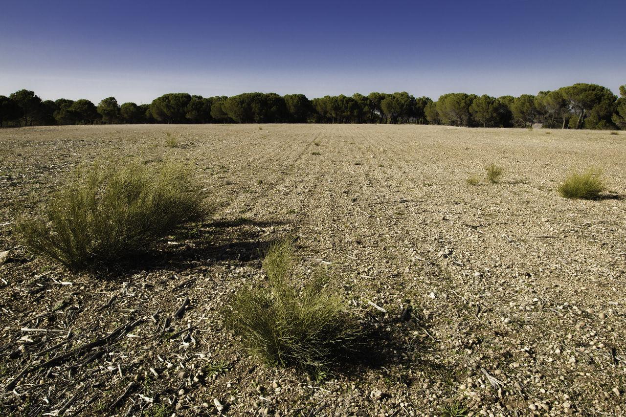 Arid Climate Arid Landscape Blue Clear Sky Copy Space Day Dry Field Fields Grass La Mancha Landscape Nature No People Non-urban Scene Outdoors Peebles Plant Scenics Sky Sunlight Tranquil Scene Tranquility Tree Tree Line