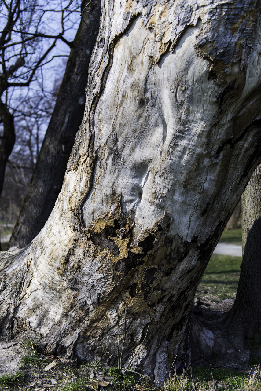 tree trunk, tree, no people, nature, day, tranquility, outdoors, close-up, beauty in nature
