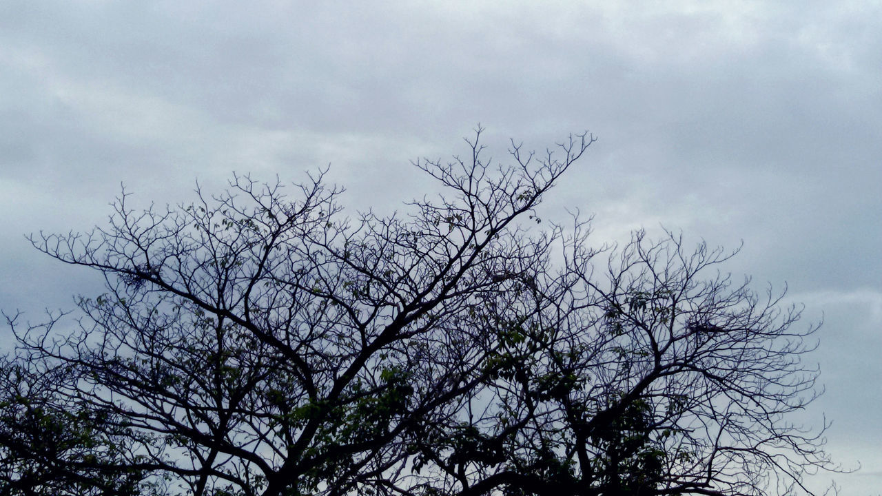 sky, nature, tree, beauty in nature, no people, outdoors, branch, bare tree, day