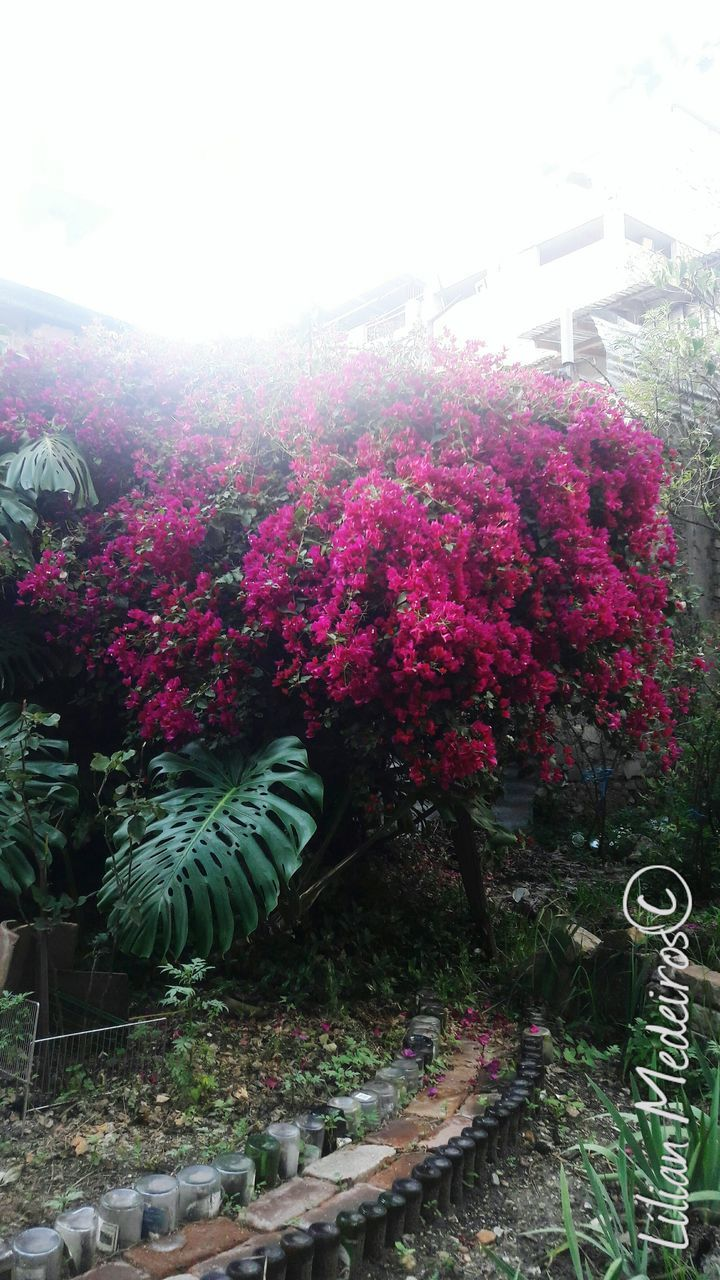 growth, plant, nature, no people, flower, beauty in nature, tree, outdoors, day