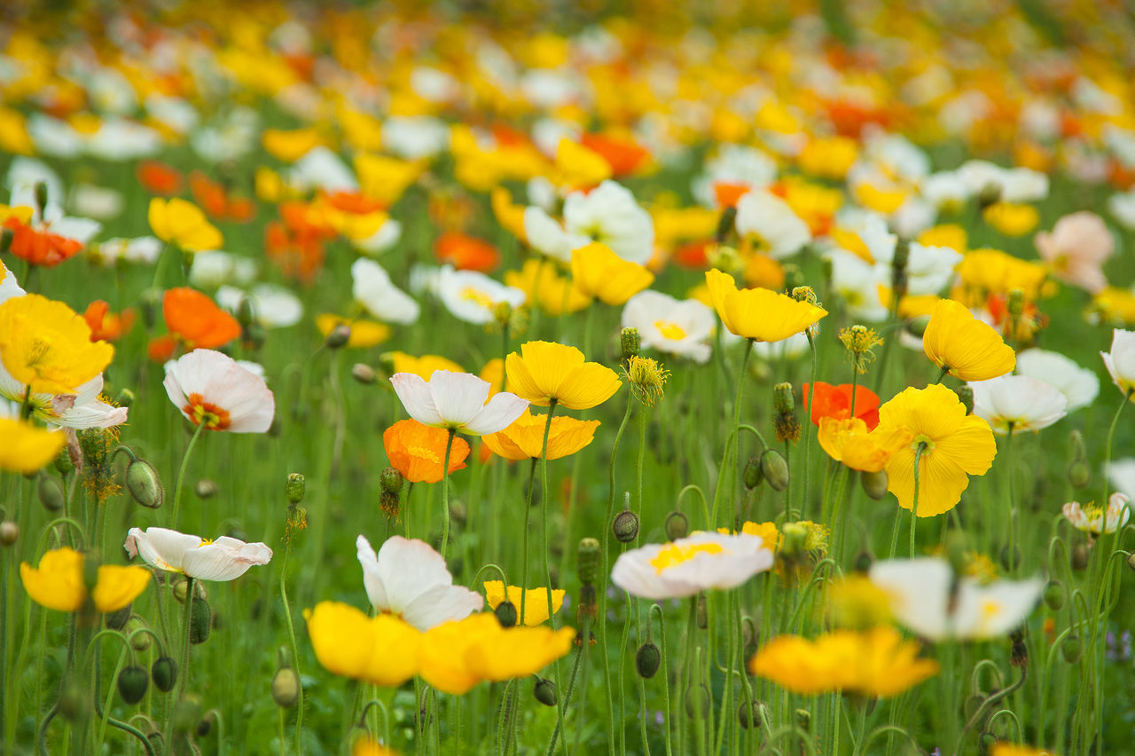 Beautiful stock photos of pflanzen, Abundance, Beauty In Nature, Blooming, Day