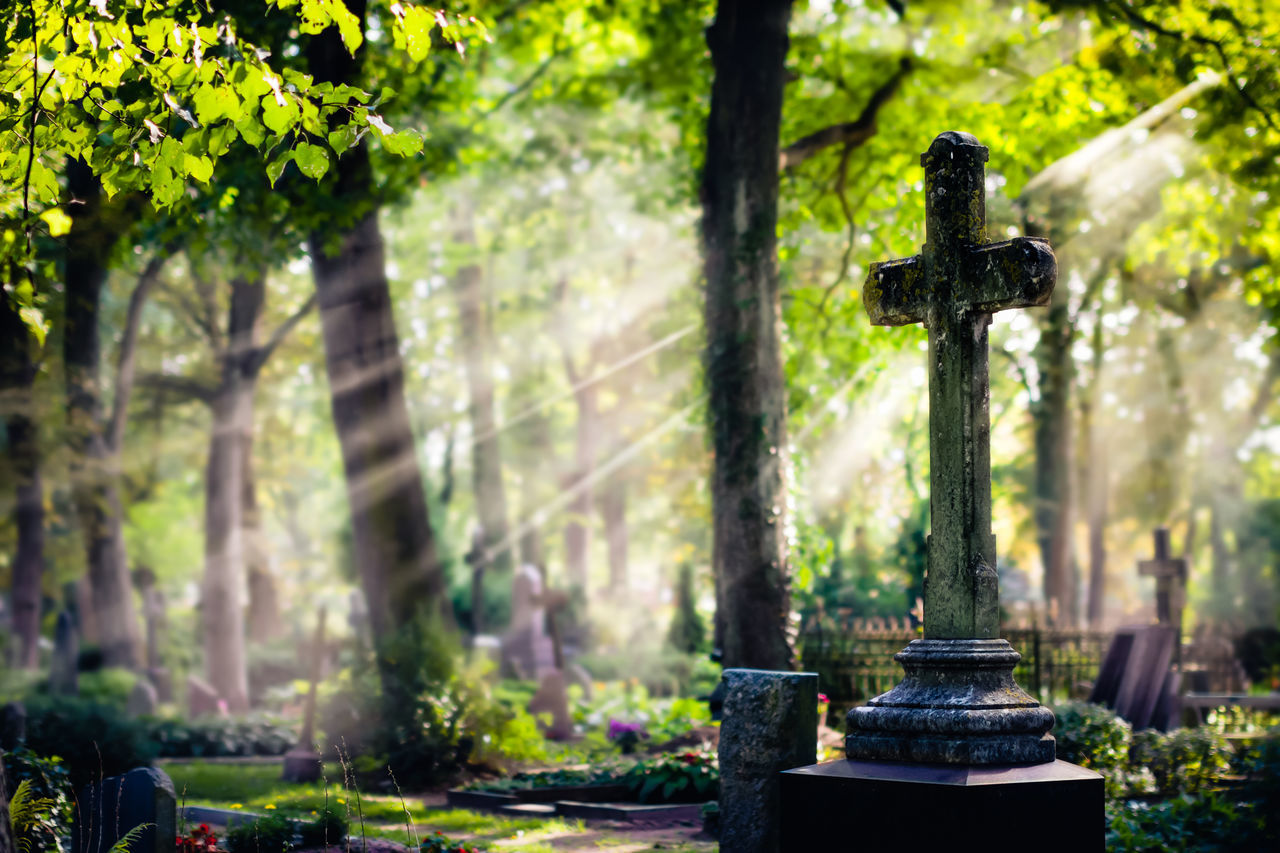 Catholic Cemetery Cross Day Death Forest Grave Graveyard Graveyard Beauty Latvia Liepaja Nature No People Outdoors Park Religion Religious  Spirituality Sunlight Sunlight And Shadow Tree