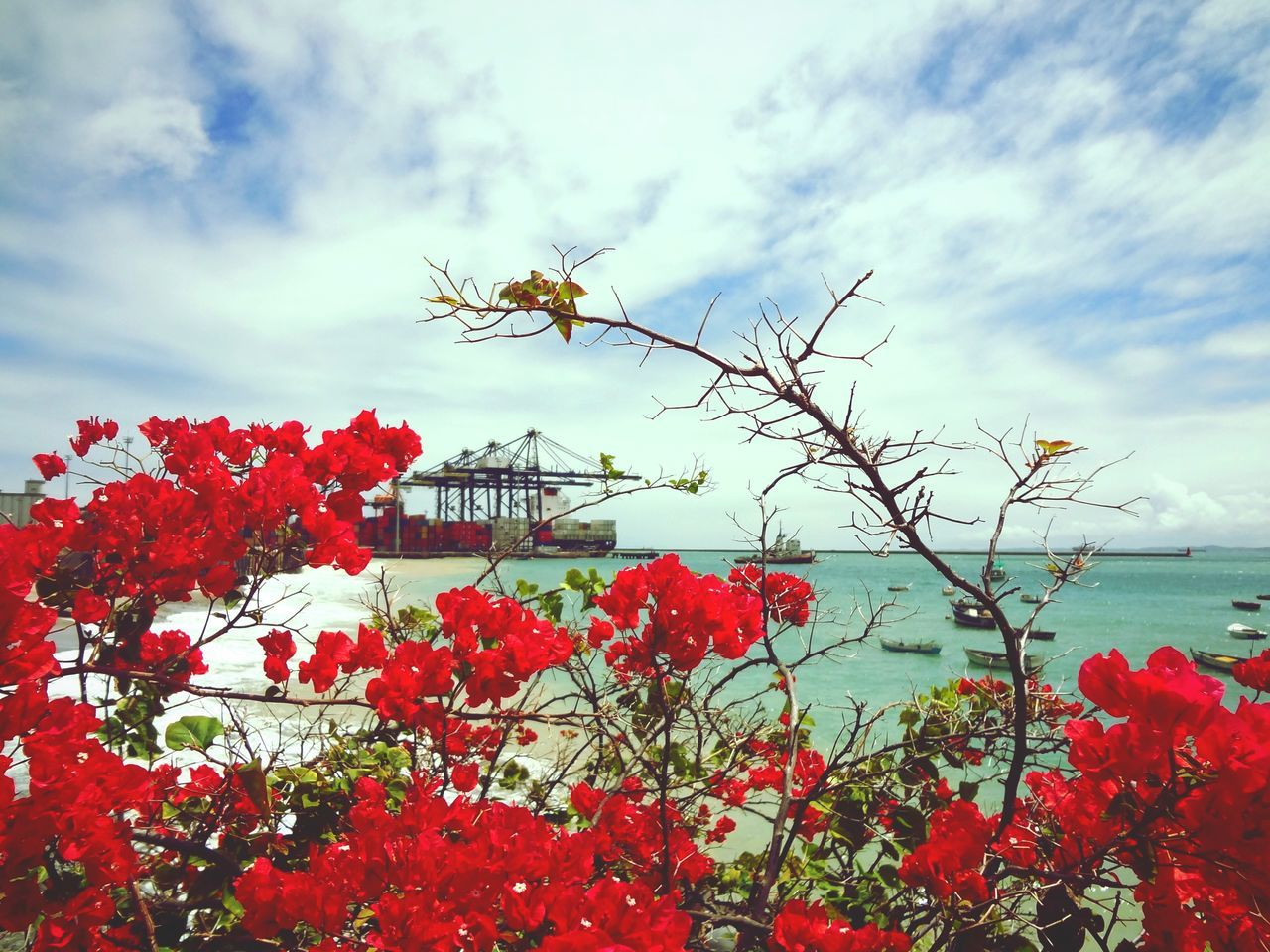 Bahia Brasil Sky And Clouds View From The Window... Magic Color Flowers Magic Moments Nature_collection Aroundtheworld Life In Colors Amazing View Endlesssummer Beachphotography Waves, Ocean, Nature Capture The Moment Blessed  Beautiful Bahiadetodosossantos