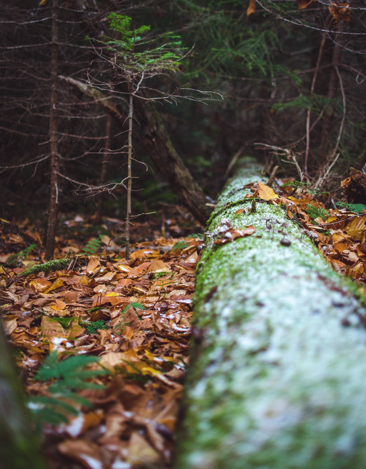 IG: Memxries Forest Nature Moss Autumn Outdoors Tree Beauty In Nature Scenics Freshness Landscape Photography Nature Photography Beauty In Nature Pine Leaves Snow Timber Leaf Growth Outdoor Camping Weeds Campfire Branch Scenery