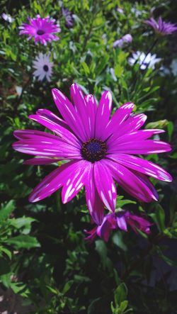 Flowers Macro_flower EyeEm Flower Nature