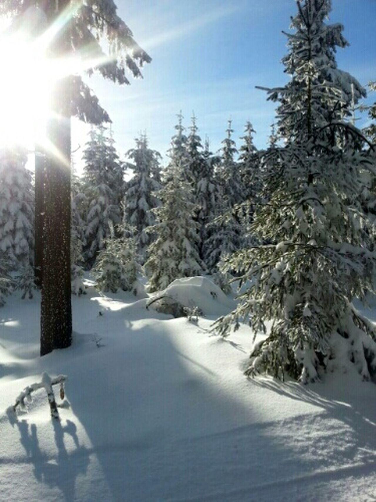 The Purist (no Edit, No Filter) TheMinimals (less Edit Juxt Photography) Landscape_Collection Snow Trees Sunshine! Winter Trees Winter Landscape Cold Winter ❄⛄