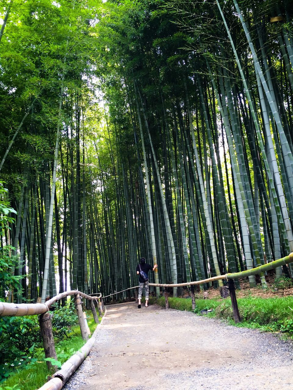 tree, bamboo grove, forest, nature, bamboo - plant, outdoors, day, real people, one person, beauty in nature, growth, walking, tranquil scene, tranquility, scenics, standing, full length, tree trunk, men, lifestyles, people