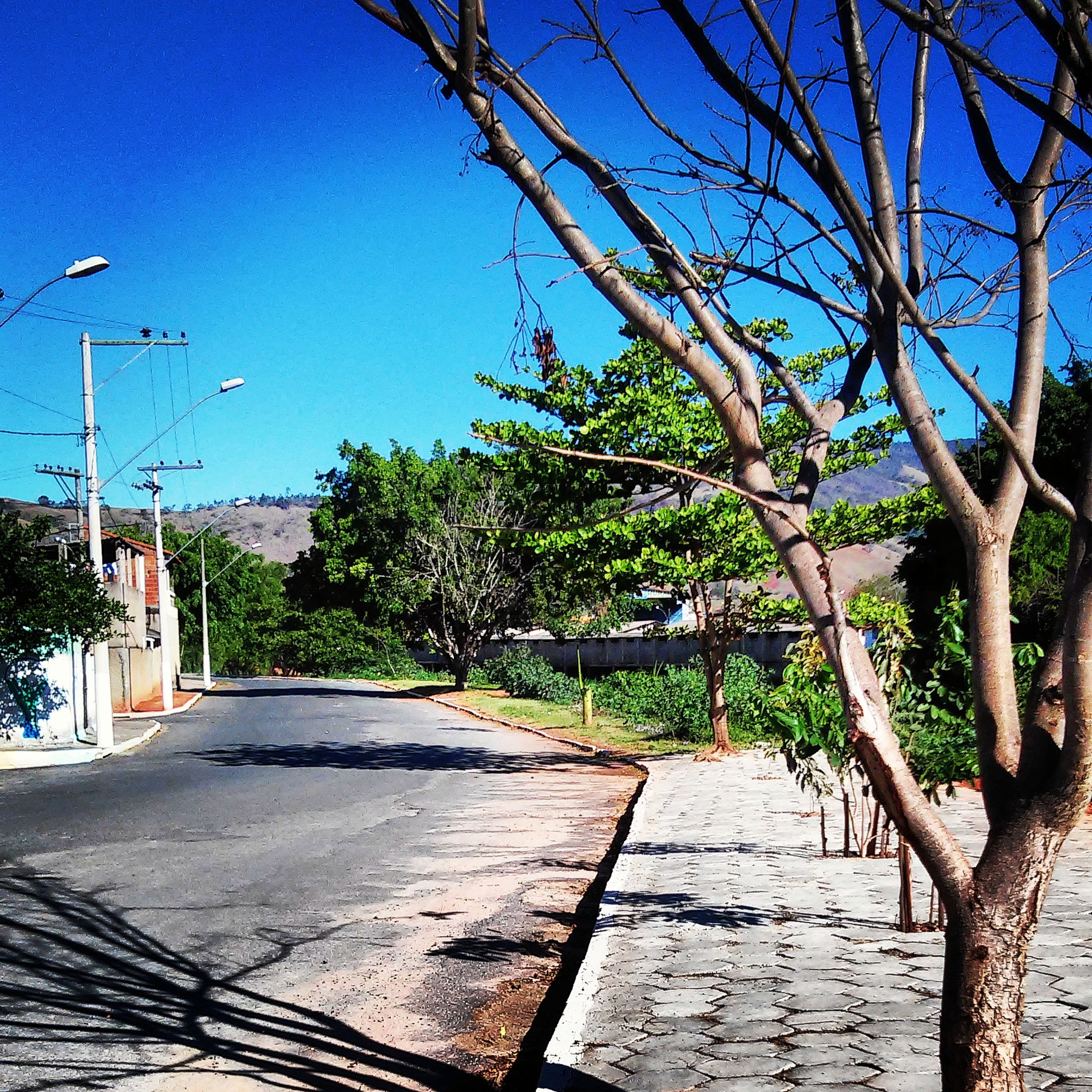 clear sky, blue, tree, built structure, building exterior, the way forward, architecture, sunlight, footpath, shadow, sidewalk, street light, walkway, street, cobblestone, day, outdoors, sky, house, plant