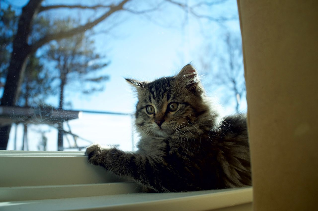 Animal Themes Cat Close-up Day Domestic Animals Domestic Cat Duluth Feline Indoors  Mammal Minnesota No People One Animal Pets Sky Whisker