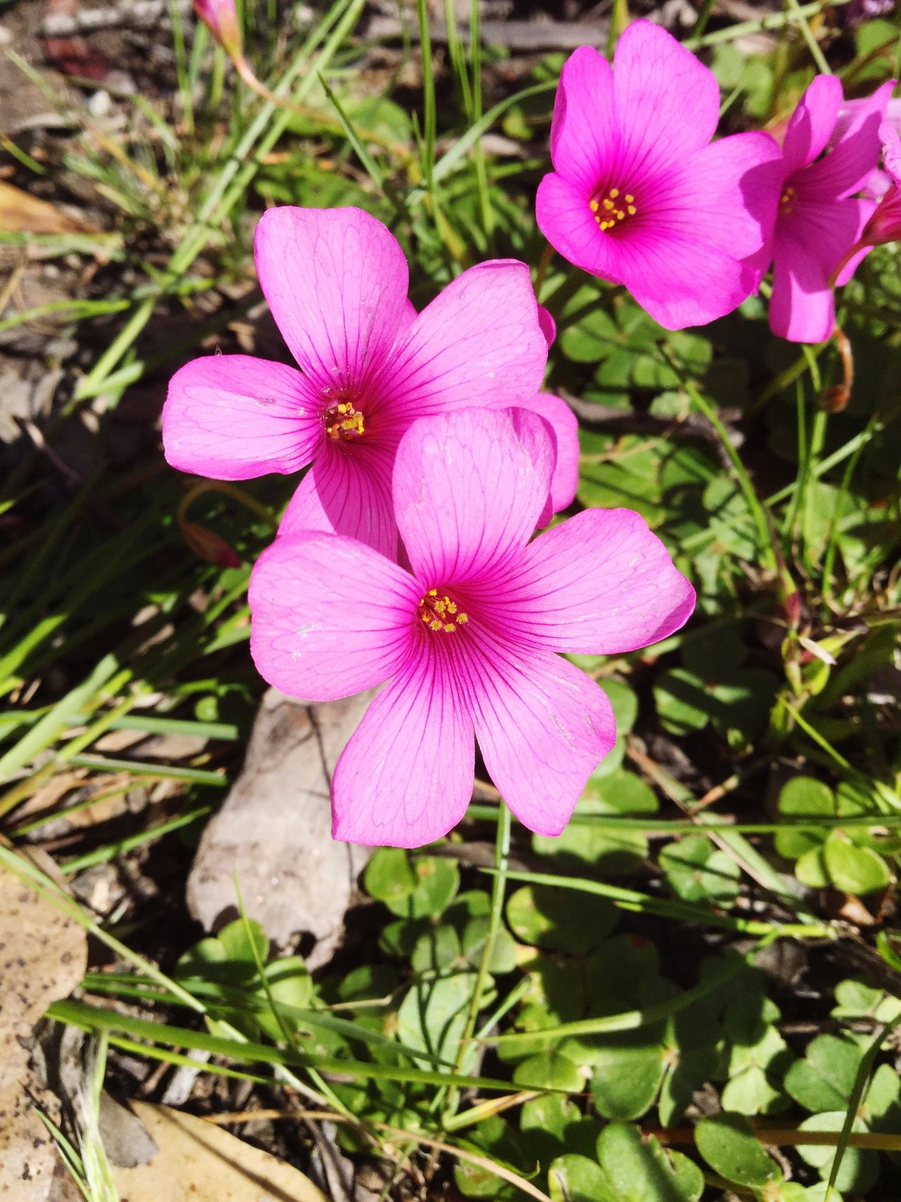 Flower Fragility Petal Flower Head Pink Outdoors Freshness Beauty In Nature Taking Pictures Capture The Moment Check This Out Sunday No People Blooming