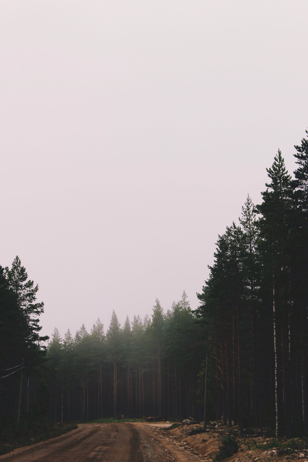 Summer Forest Trees Mist Misty Pine TheWeekOnEyeEM Desolate Hidden Gems