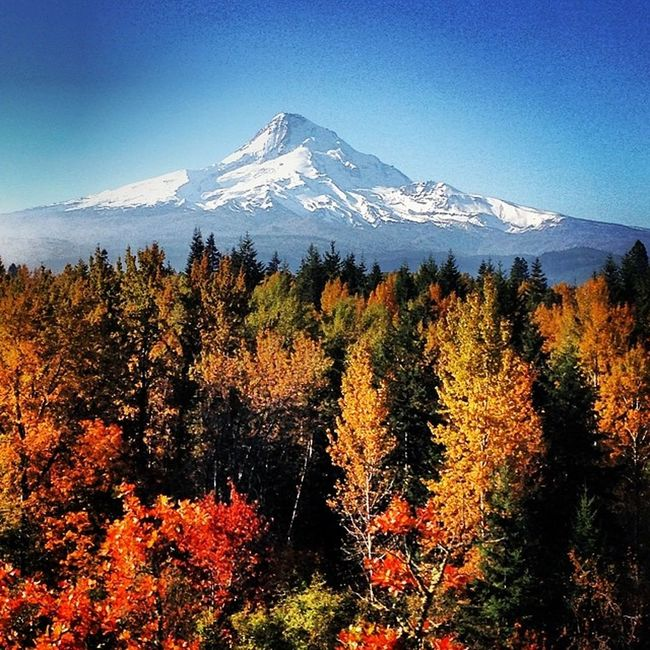 MtHood Livelife Lovelife Hoodriver HOODLIFE Fall Autumn Itsamazingoutthere Exploregon