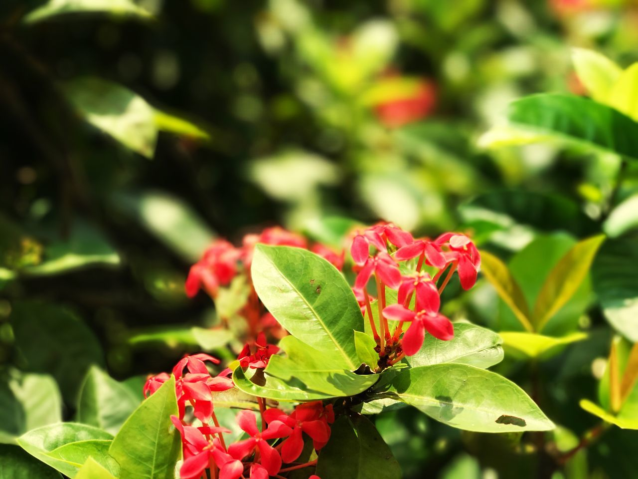 bloom to grow Leaf Growth Nature Plant Beauty In Nature Green Color Day No People Focus On Foreground Outdoors Close-up Freshness Red Fragility Flower Flower Head First Eyeem Photo