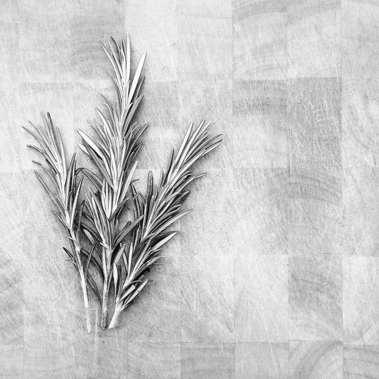 Rosemary on wooden chopping board using VSCO black and white film preset Analogue Photography Background Black And White Chopping Board Close-up Film Effect Herb Herbs High Angle View Leaf Leaves Nature Plant Rosemary Sprig Sprigs Surface VSCO Wood Wooden