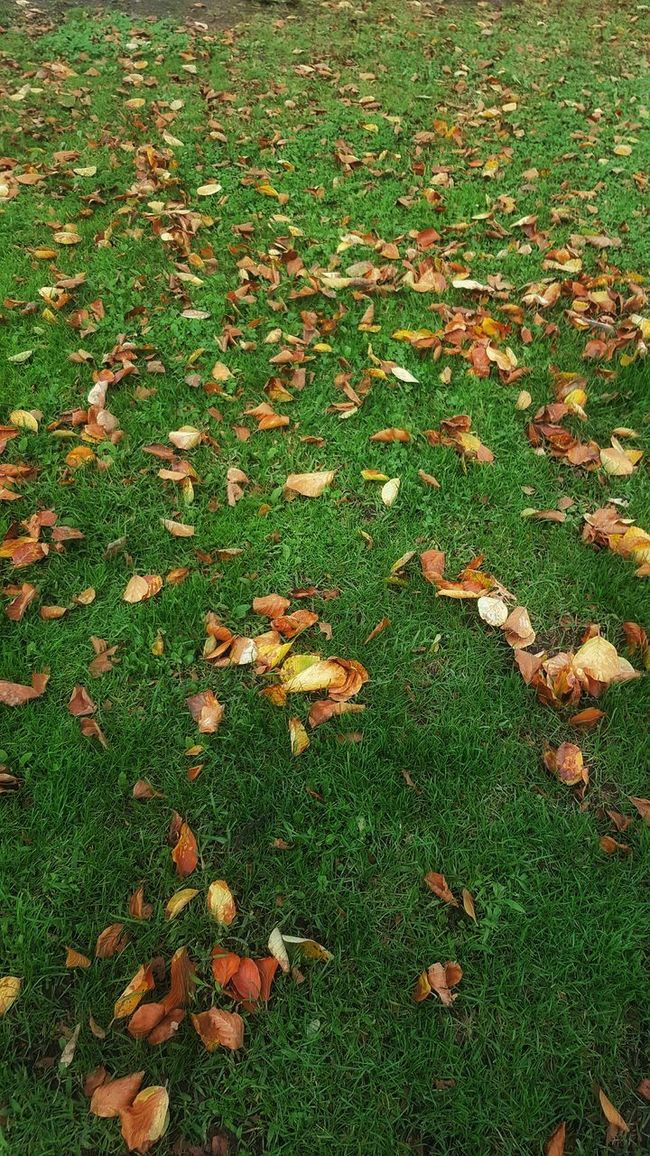 Automne Automn Leaves Otoño Otoño 🍁 Magia Otoñal ... Melancolica mmm