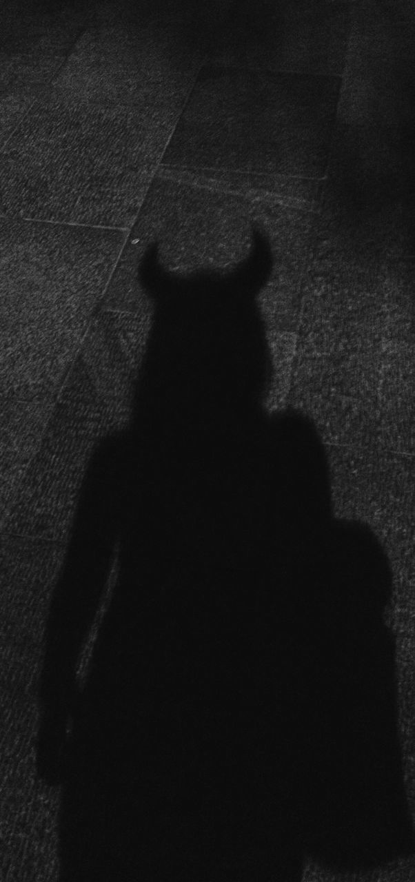 shadow, real people, focus on shadow, one person, mammal, rear view, one animal, silhouette, pets, walking, domestic animals, dog, standing, sunlight, men, day, outdoors, lifestyles, people