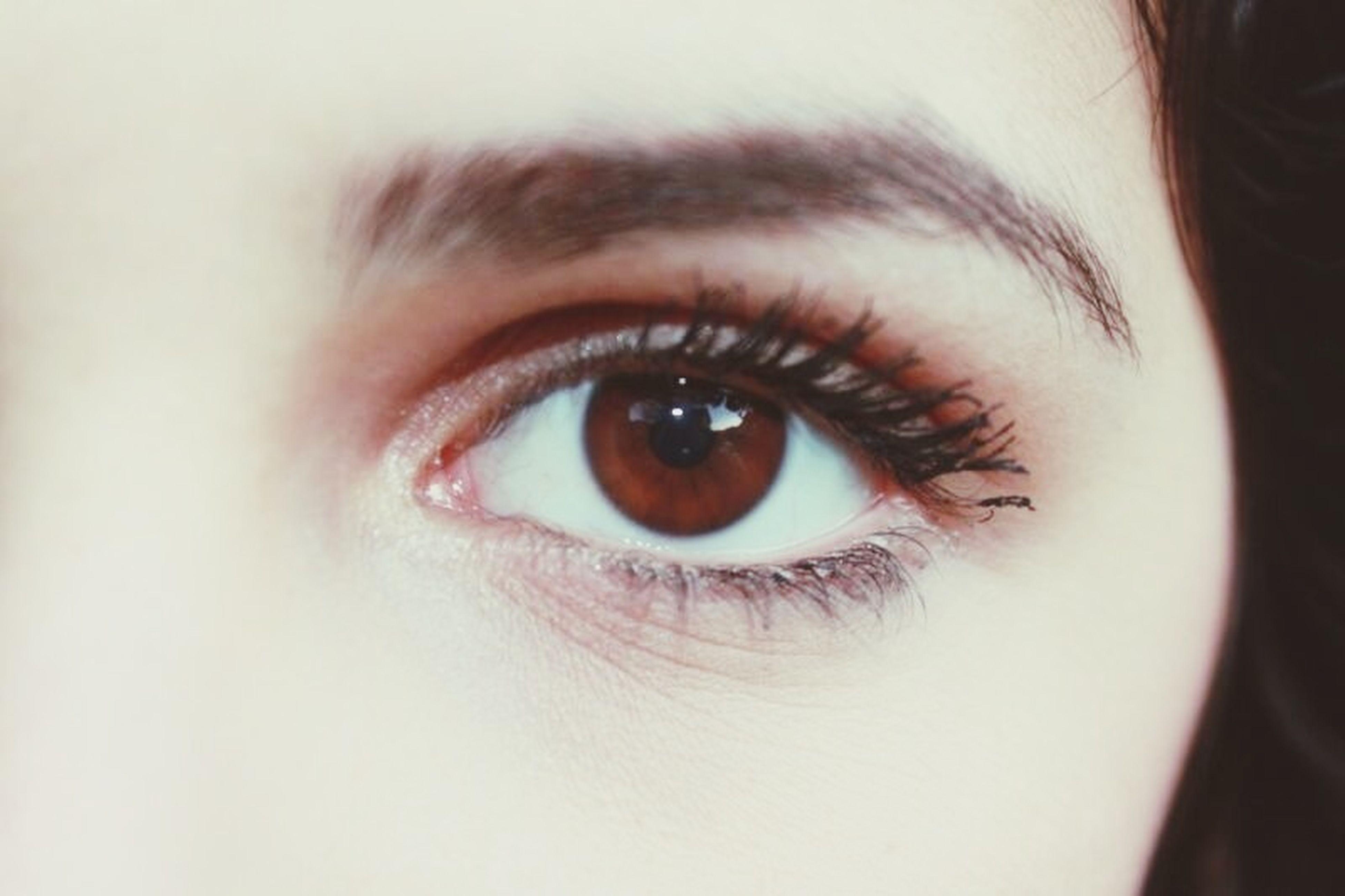 human eye, eyelash, close-up, looking at camera, portrait, eyesight, sensory perception, indoors, extreme close-up, human face, eyebrow, human skin, iris - eye, headshot, eyeball, lifestyles, part of