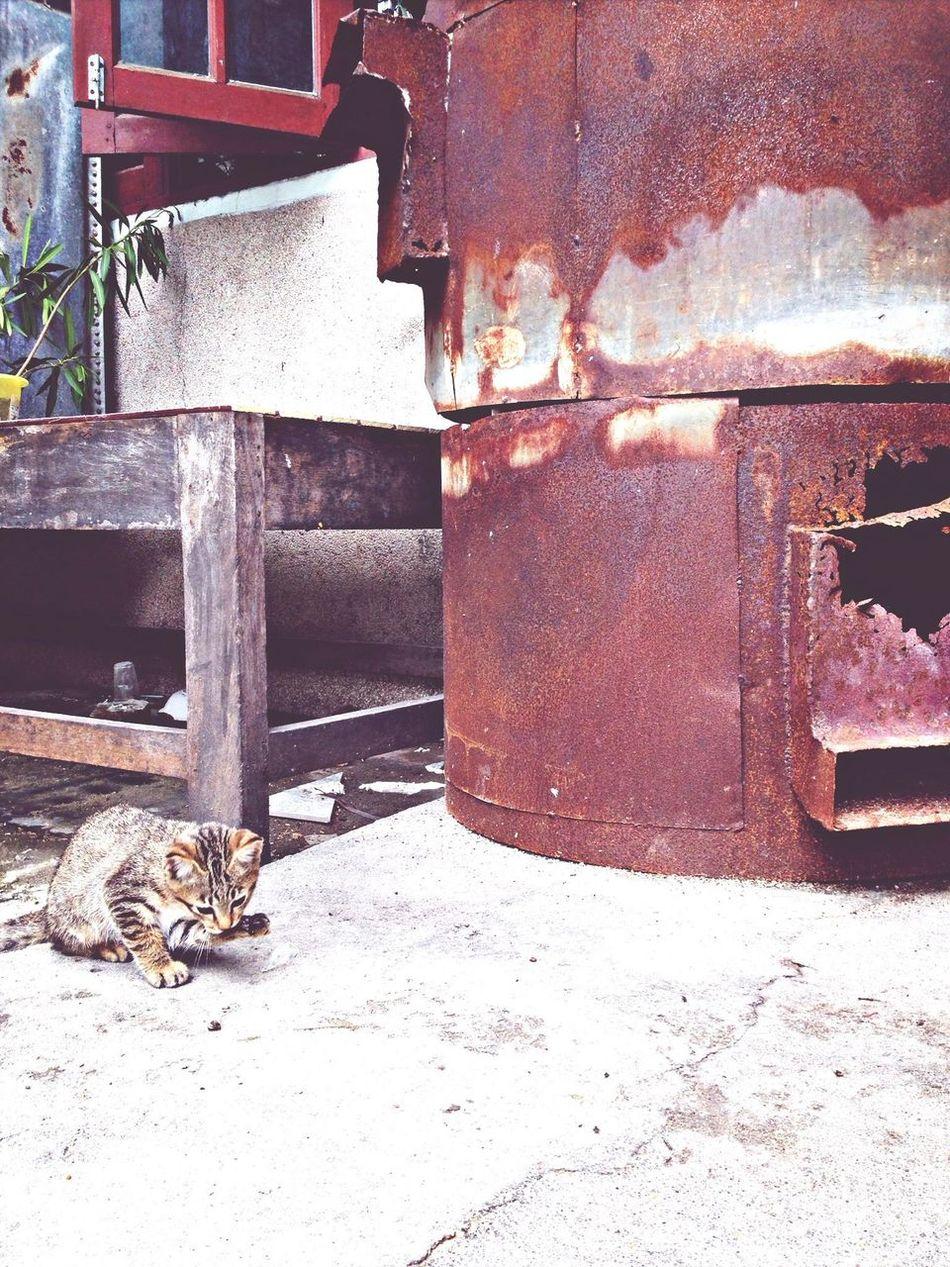 Cat Thailand Poppula Photos อยู่ใกล้คุณ