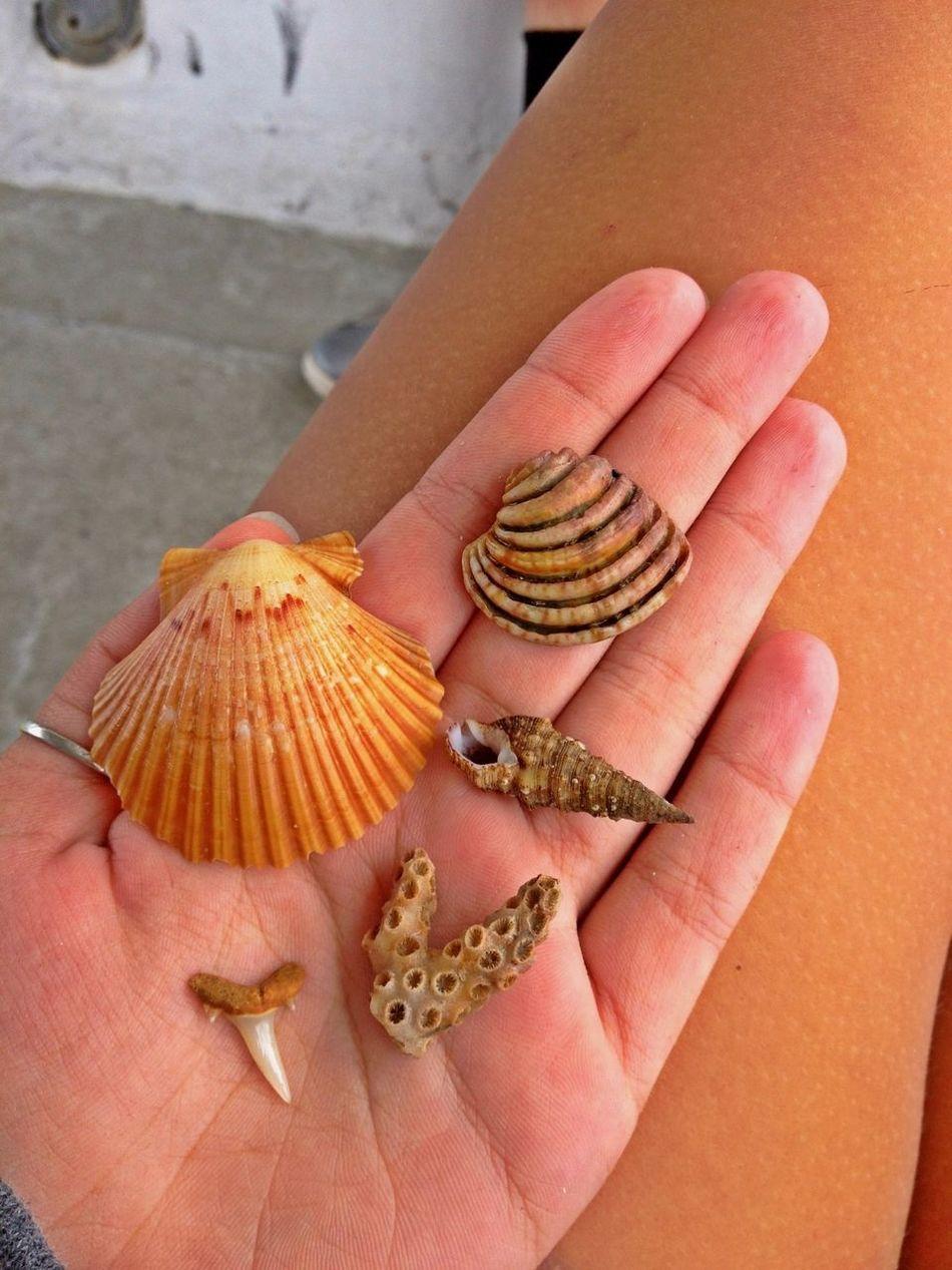 Found these 60 ft deep in the ocean! SCUBA  Shells Sharktooth