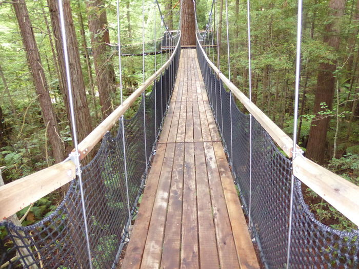 A walk in the Treetops Bridge - Man Made Structure Forest Nature No People Outdoors Rope Bridge Tree Wood - Material WoodLand