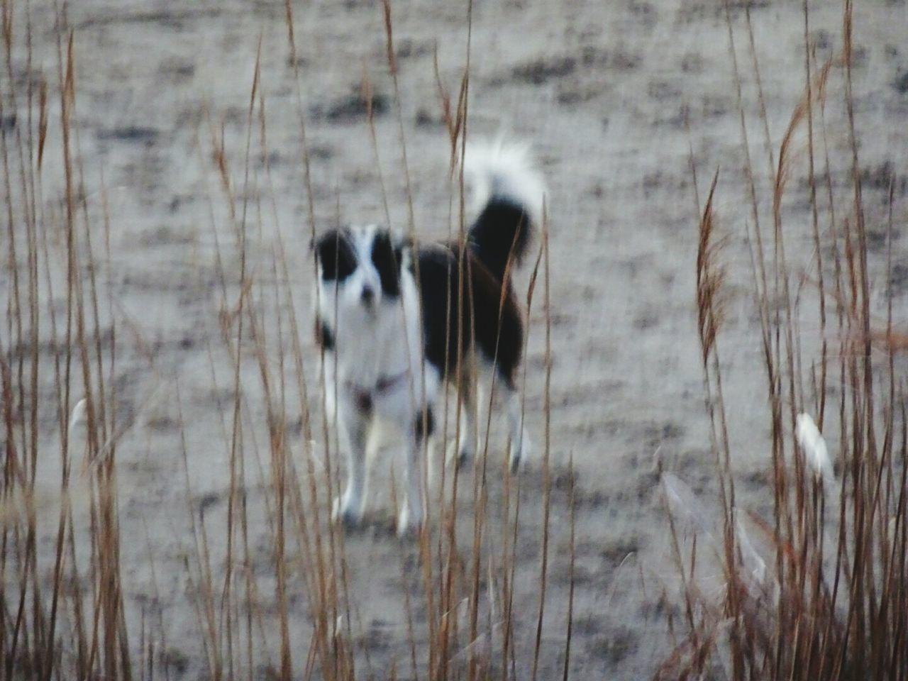 Dog On Beach Animal Themes
