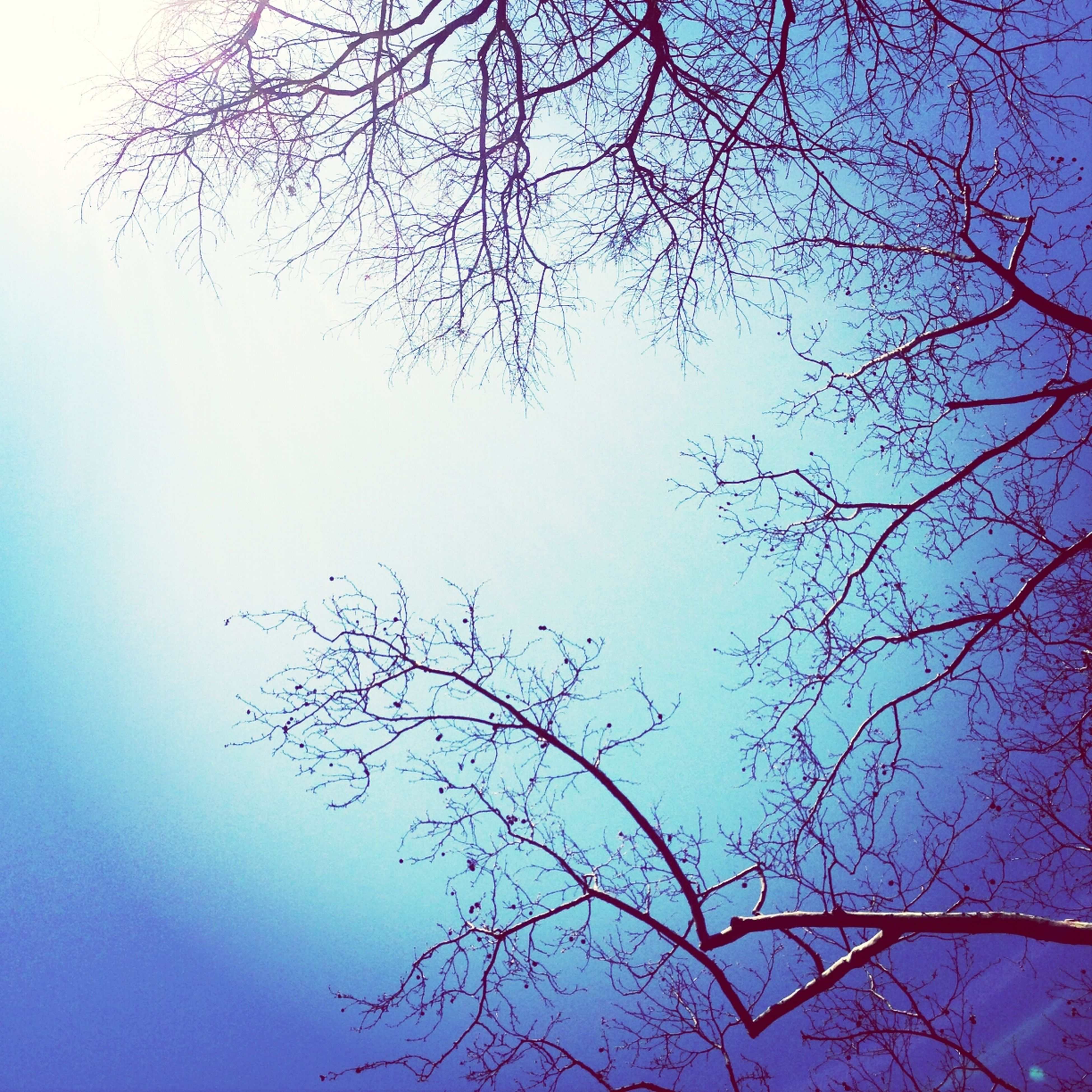 branch, tree, low angle view, bare tree, beauty in nature, sky, nature, tranquility, blue, growth, scenics, clear sky, outdoors, tranquil scene, no people, day, high section, silhouette, backgrounds, twig