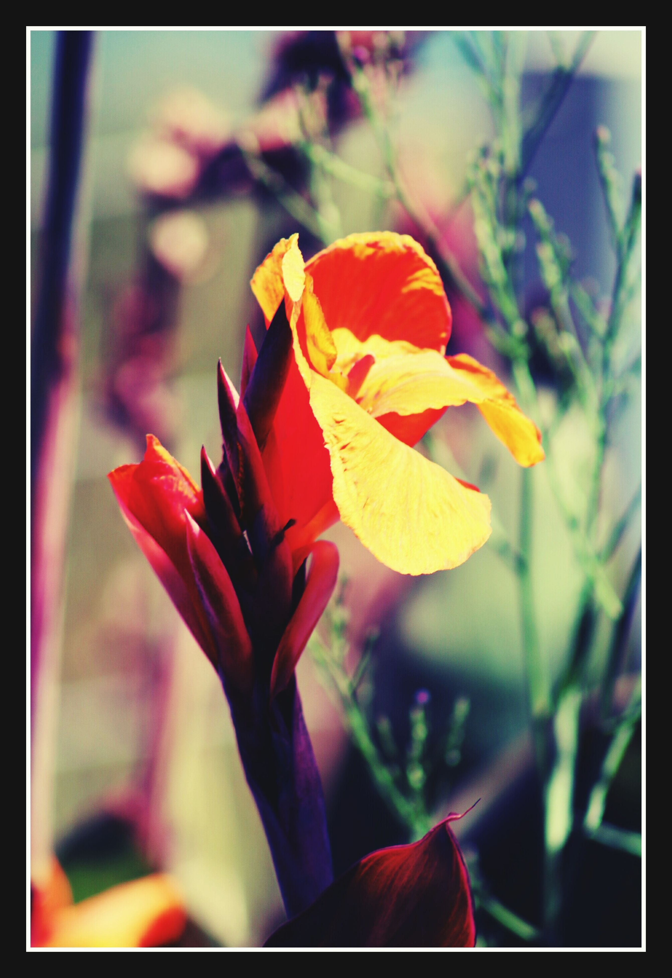 transfer print, auto post production filter, flower, petal, focus on foreground, fragility, close-up, flower head, beauty in nature, growth, freshness, orange color, nature, plant, blooming, selective focus, leaf, yellow, outdoors, red