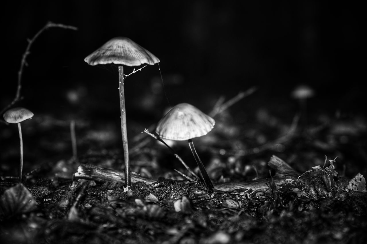 Mushroom Fungus Toadstool Nature Fly Agaric Beauty In Nature Close-up Selective Focus Growth Fragility Outdoors Freshness No People Day Fly Agaric Mushroom Blackandwhite Monochrome