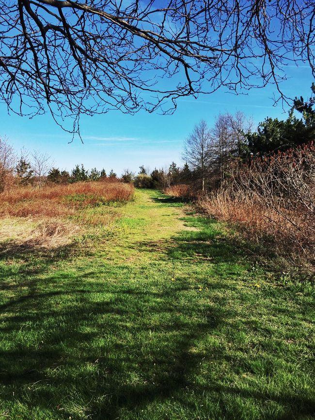 Looking yonder Wilderness NEM Mood AMPt_community Nature